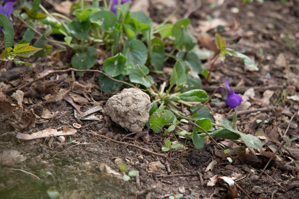 Samenbomben für Artenvielfalt im MINIHAUS München